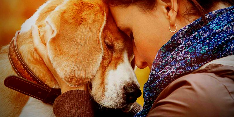 dierentolk Janna Huis, diercommunicatie, praten met je dier, intutief communiceren met dieren, telepatisch commuiceren met dieren